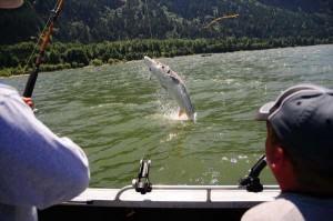 Portland Oregon,fishing,guide,salmon,sturgeon,walleye,
